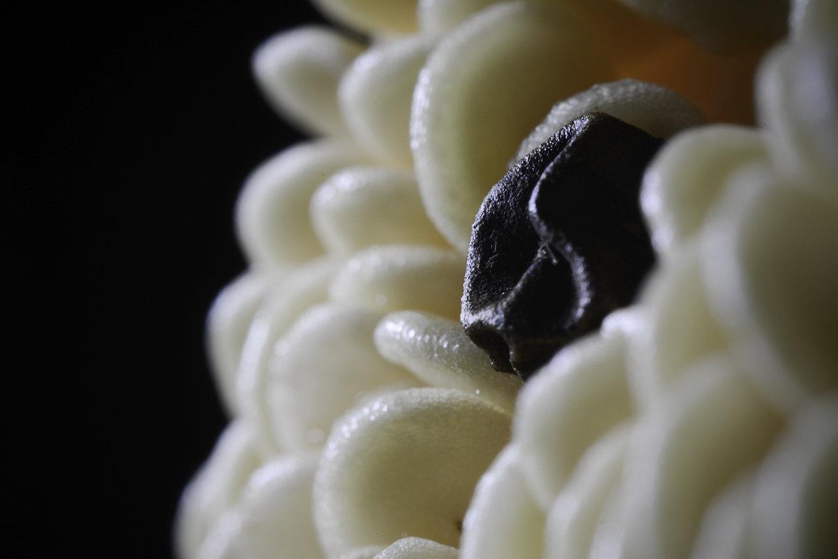 Макро из зёрен перцев - почти цветок. (Без электронного увеличения). - Михаил Палей
