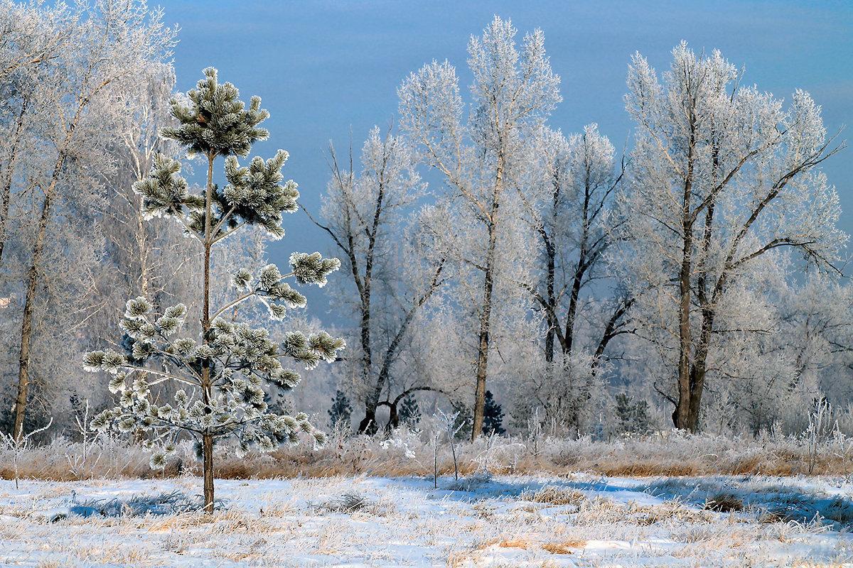 Морозное утро - Екатерина Торганская