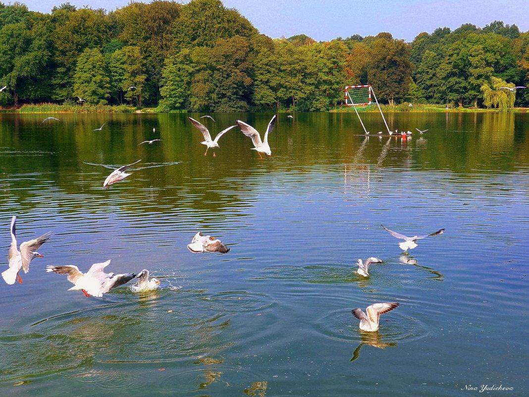 Чайки на озере - Nina Yudicheva