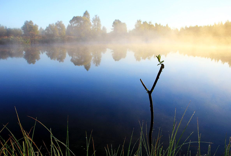 Утро на пруду - Иван