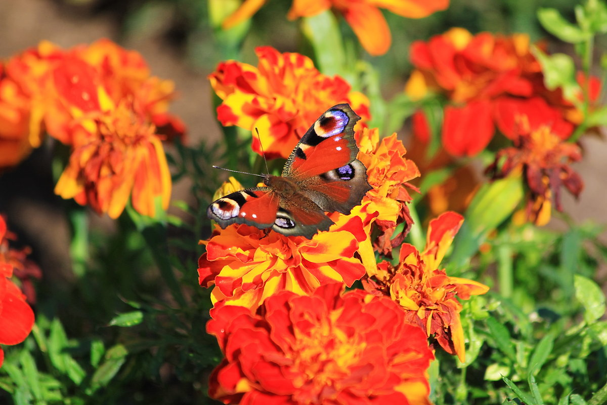 Бабочка и цветы - Александр Щеклеин