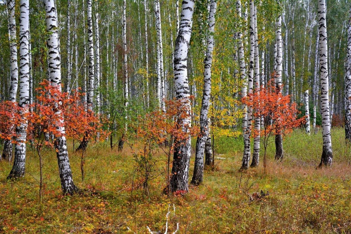 Краски сентября - Геннадий Ячменев