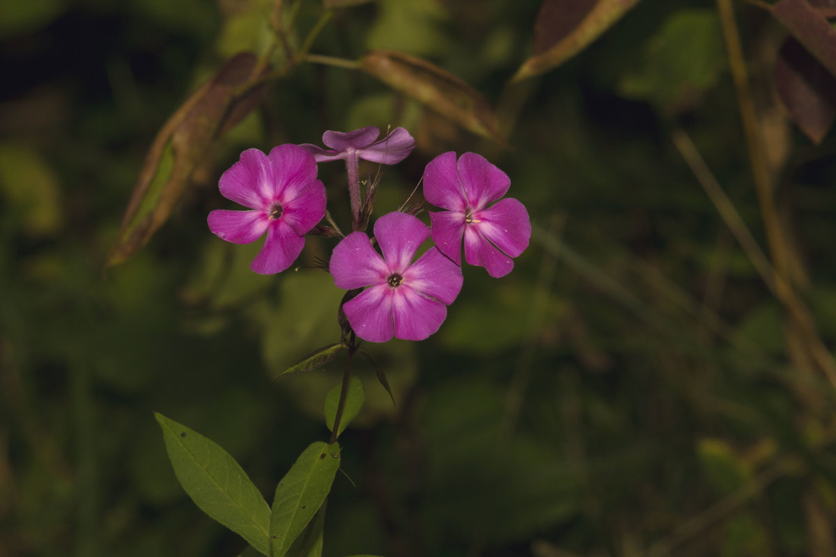 Сентябрьский цветок - Aнна Зарубина