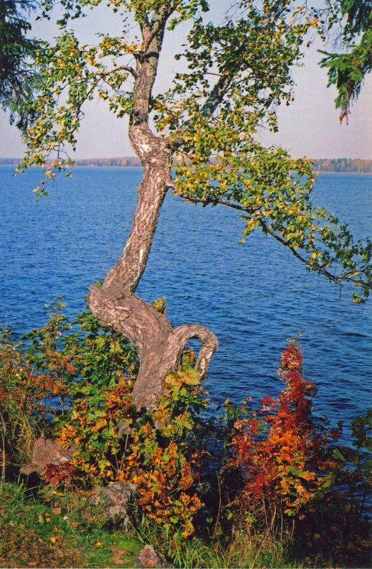 Осень - Александр Петров