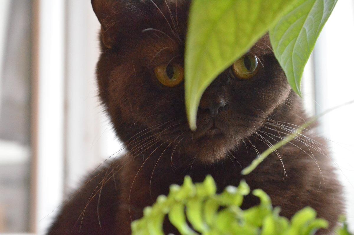 В листьях - Ольга