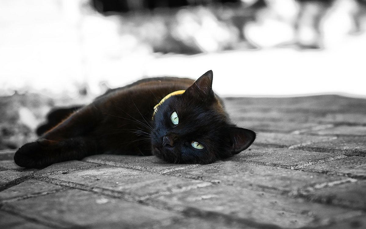 ...привычка отдыхать перед усталостью.. - Лилия .