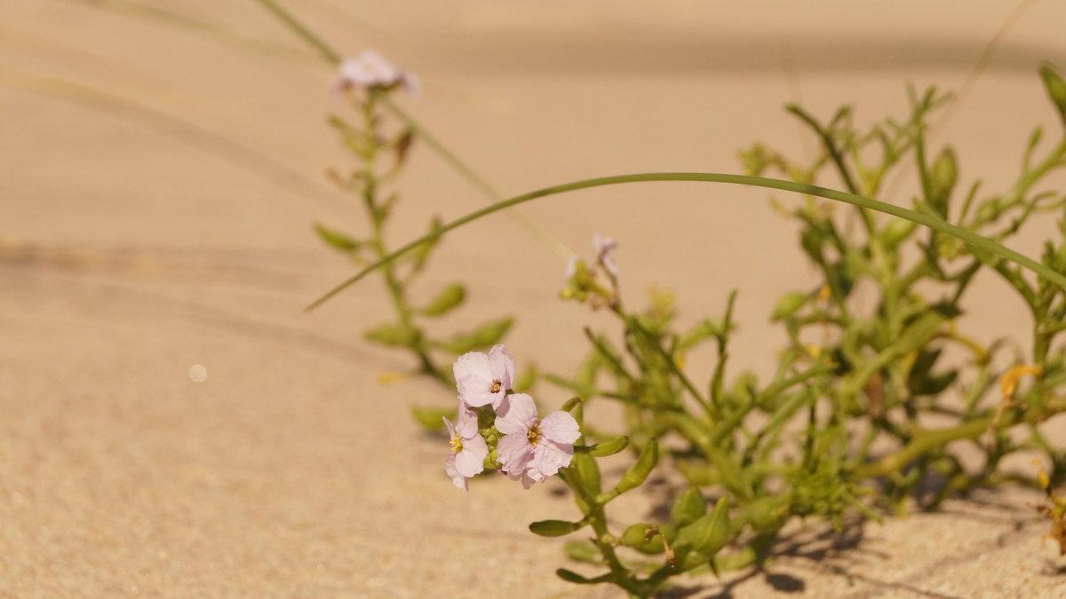жизнь в дюнах - Андрей