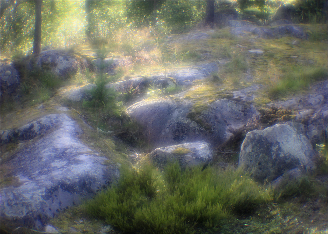 Солнечная дорожка - galina bronnikova