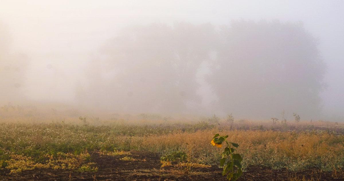 Ежики в тумане - Игорь Александрович Оренбург