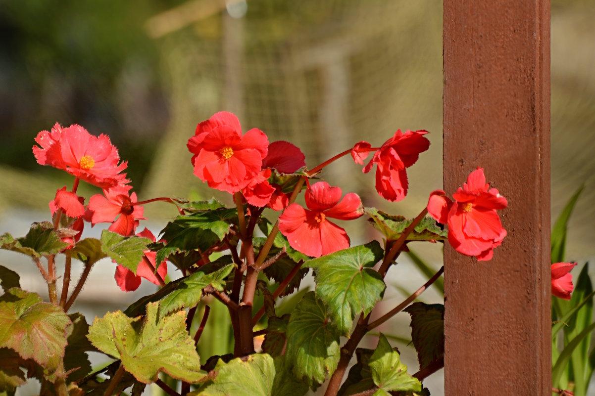 цветы - linnud