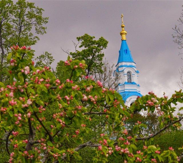 Яблочный сад на о. Валаам - Павел
