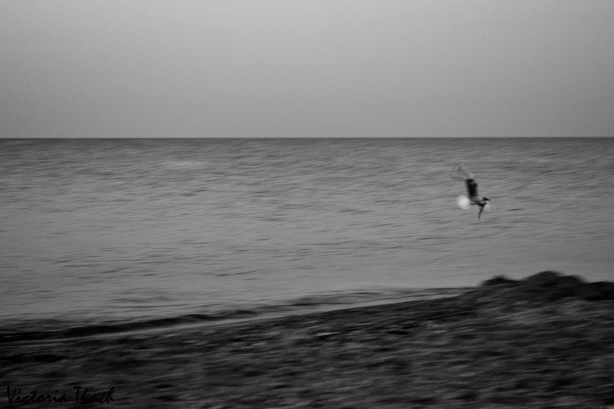 Чайка - Viktoria Tkach