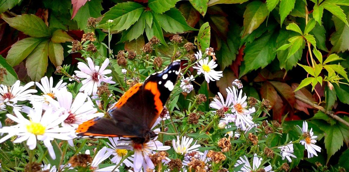 Последняя бабочка - Мила