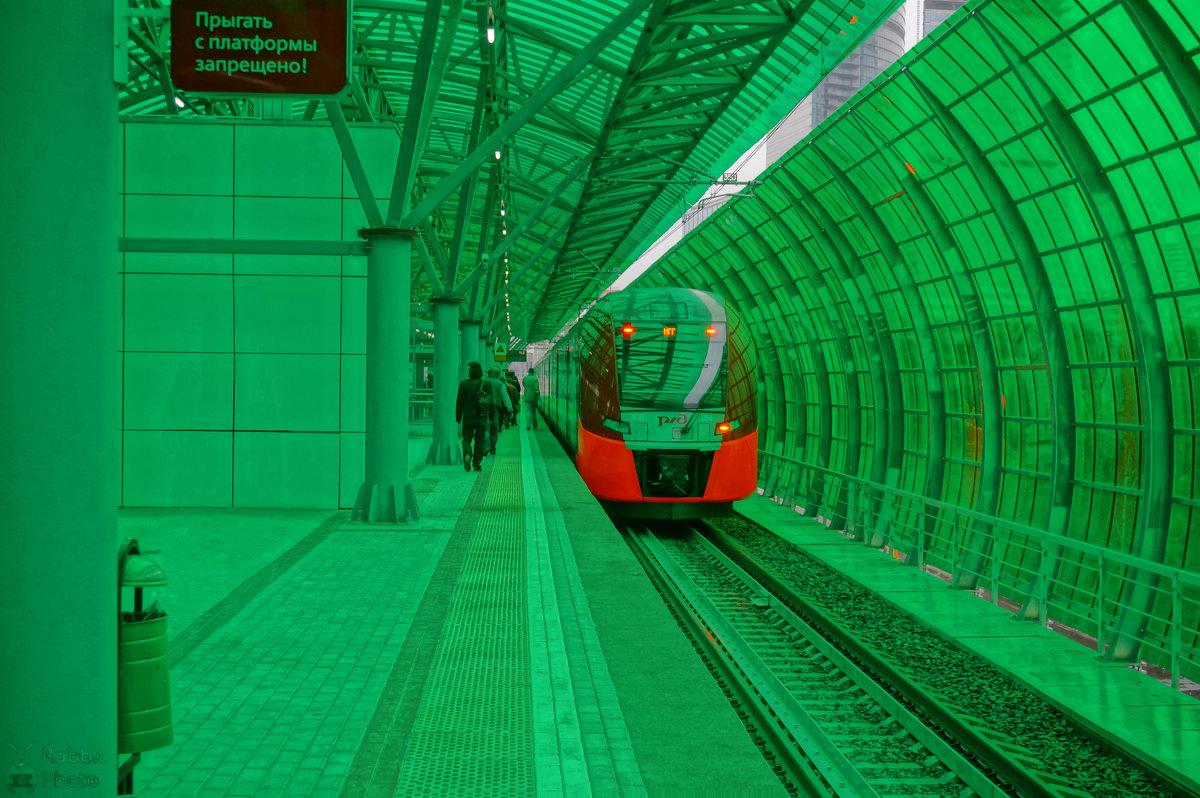 В зеленом окружении... - Rabbit Photo