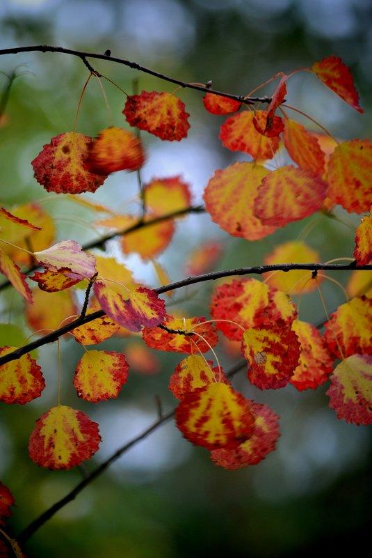 осень - Светлана Пантелеева