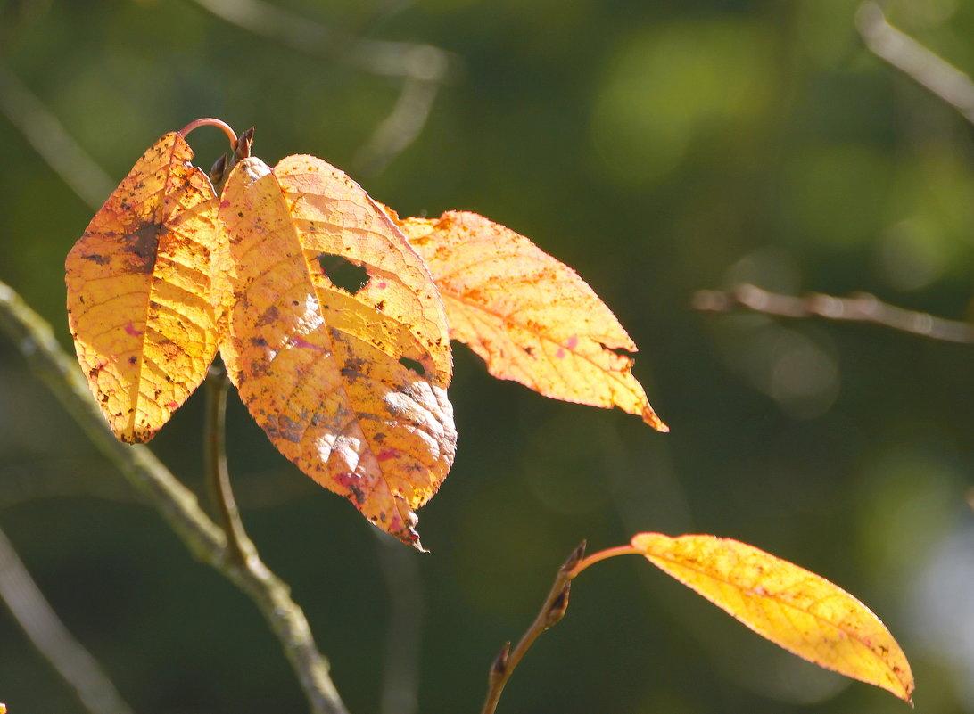 Осенние краски.... - Tatiana Markova