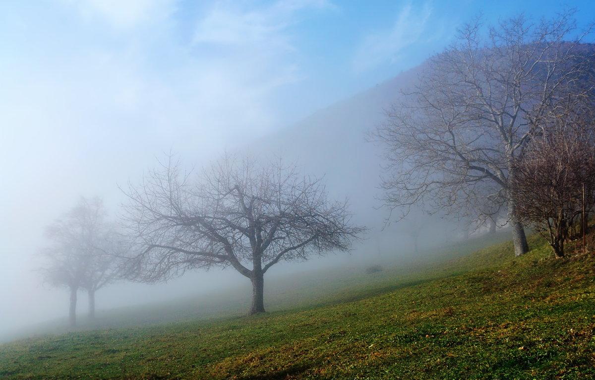 выплывают из тумана... - Elena Wymann