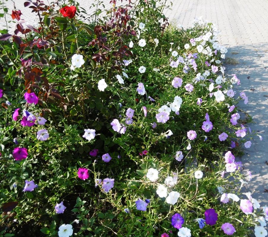Цветы ушедшего лета - татьяна