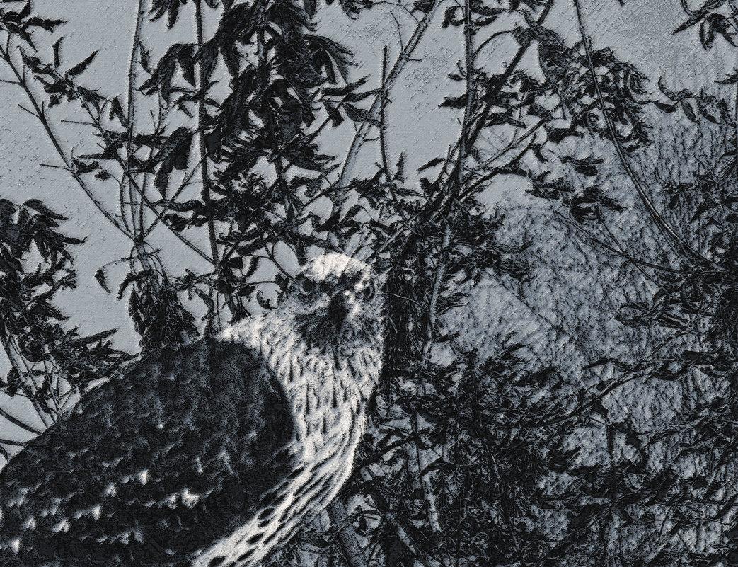 важный птиц - Юлия Денискина