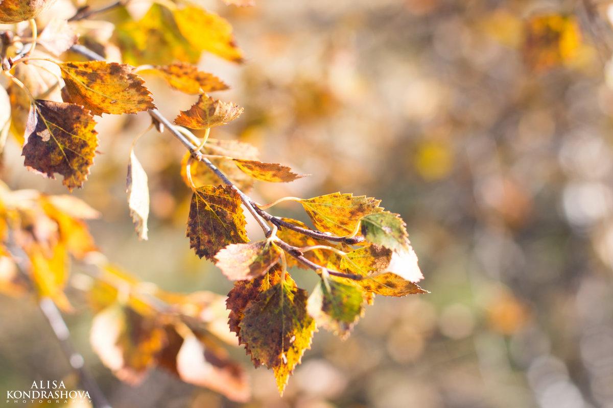 Осень пришла - Алиса Кондрашова
