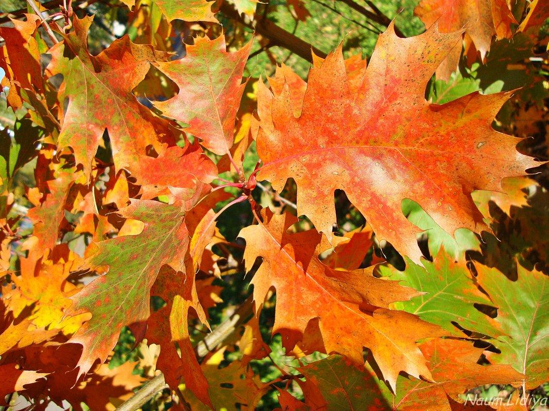 Краски осени.Вальс листьв - Лидия (naum.lidiya)