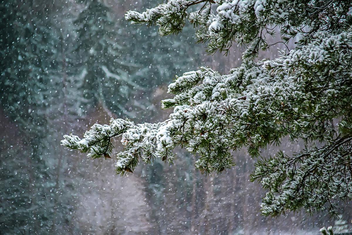 Зимняя сказка 2 - Алексей Румянцев