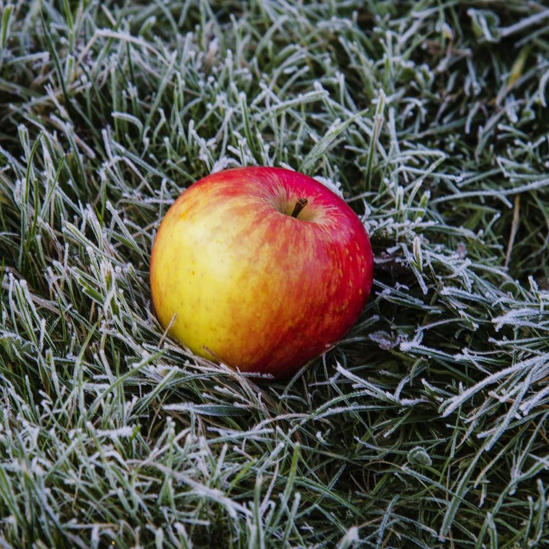 яблоко - ник. петрович земцов