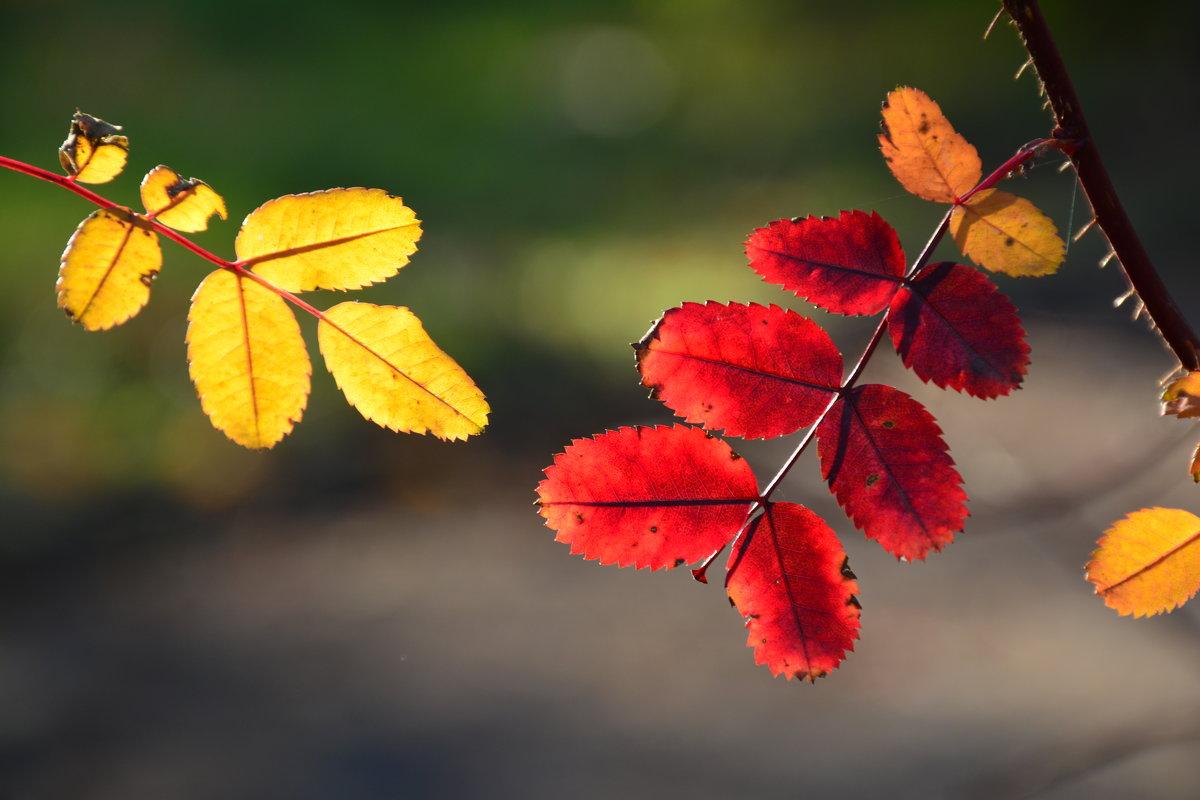 Краски Осени... - Виктор Бусель