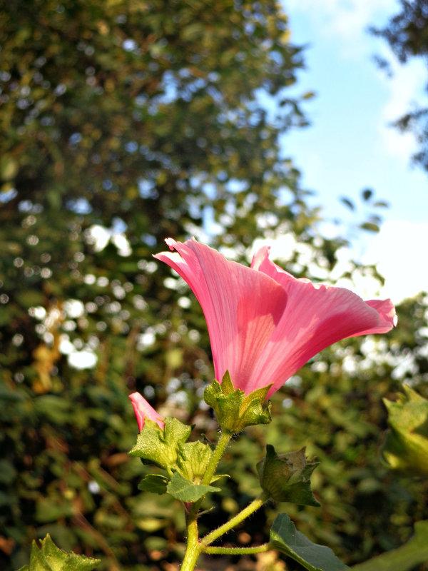 Цветок дарющий вдохновение - Герман