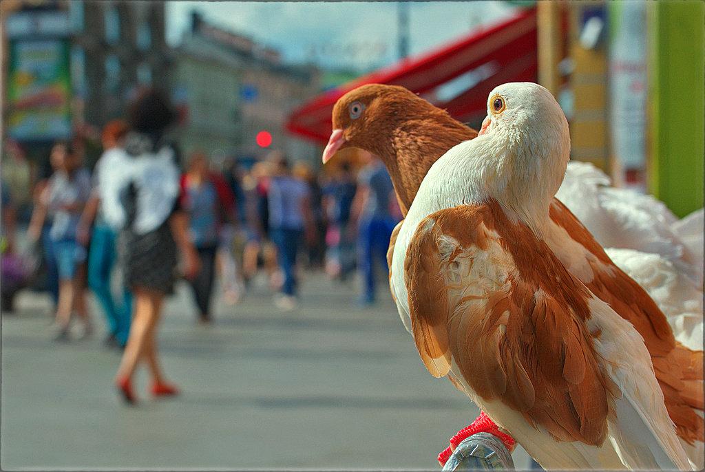 Голуби и ангел - Цветков Виктор Васильевич