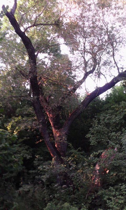 дерево - Марина Бельская