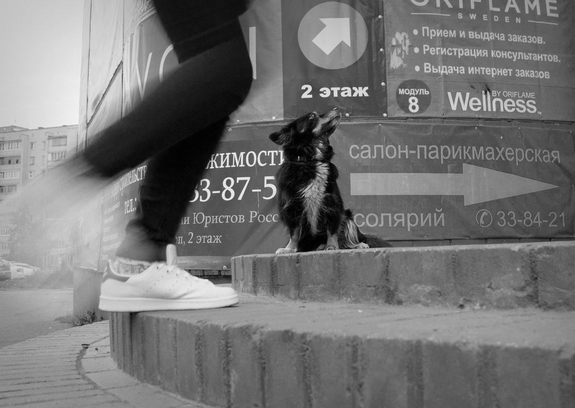 Указатель - Владимир Голиков