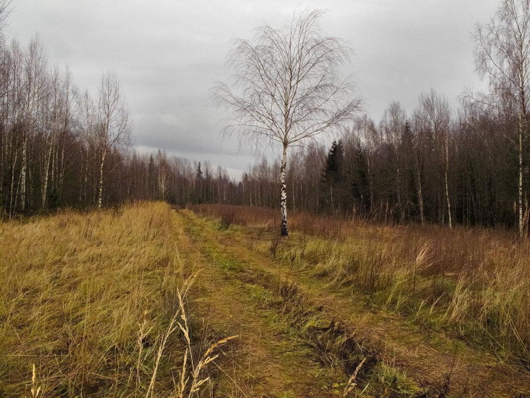 осень в лесу - Galina G