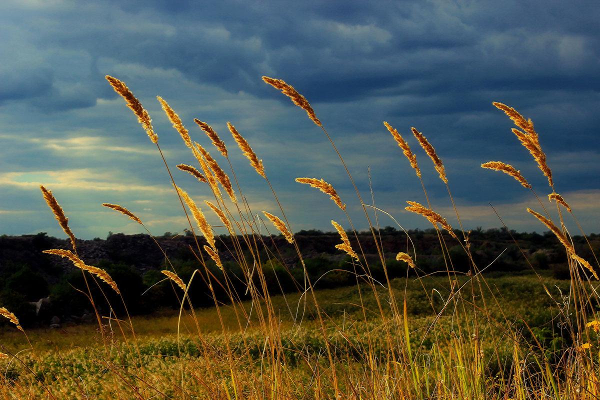 Однажды в поле... - Nataliya Oleinik