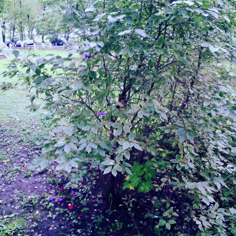 Ливень листьев кружевной Шелестит о ней одной... - Ольга Кривых