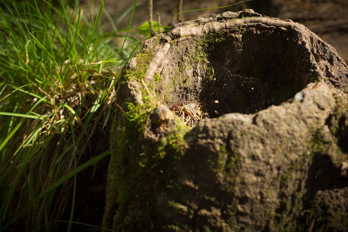Портрет пенька в естественной среде обитания - Руслан