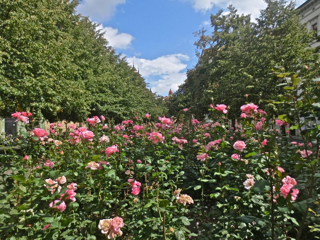 миллион алых роз - Елена