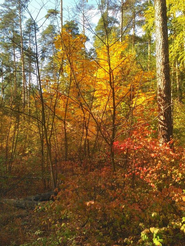 Осень в лесу - Aleksandr Shishin