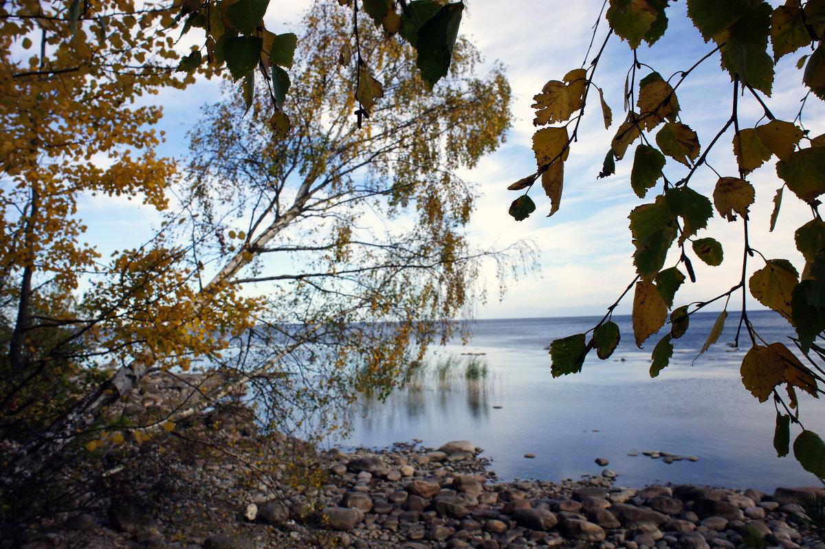 На берегу Ладожского озера. Осень - Елена Павлова (Смолова)