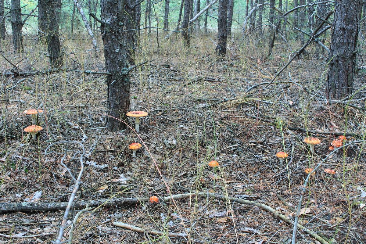 пошел в лес по грибы... - Александр Дюдюкин