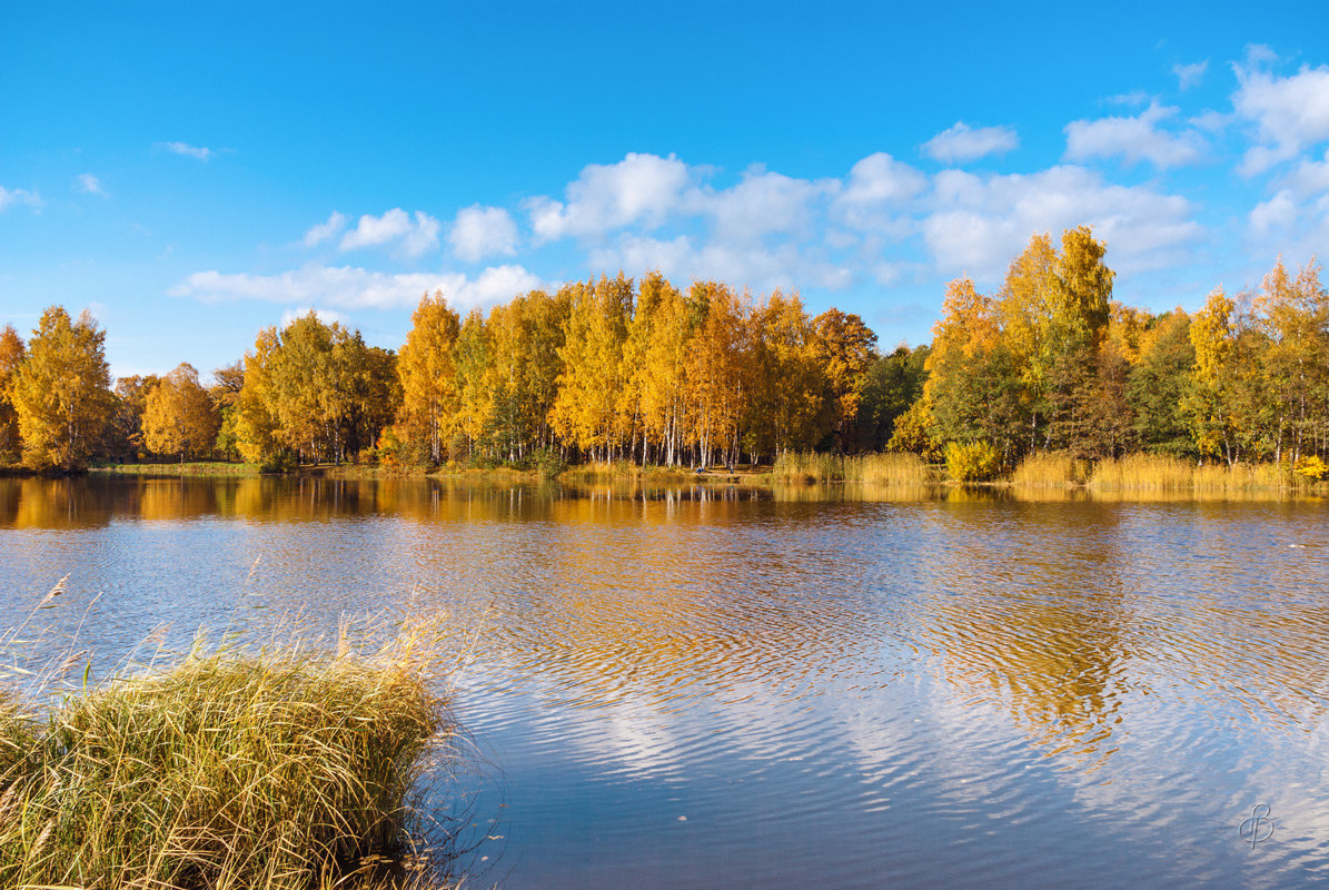 Осенний пруд - Виталий