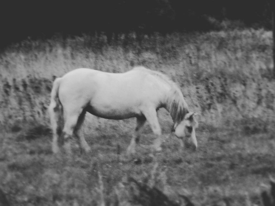 Лошадь - Шура Еремеева