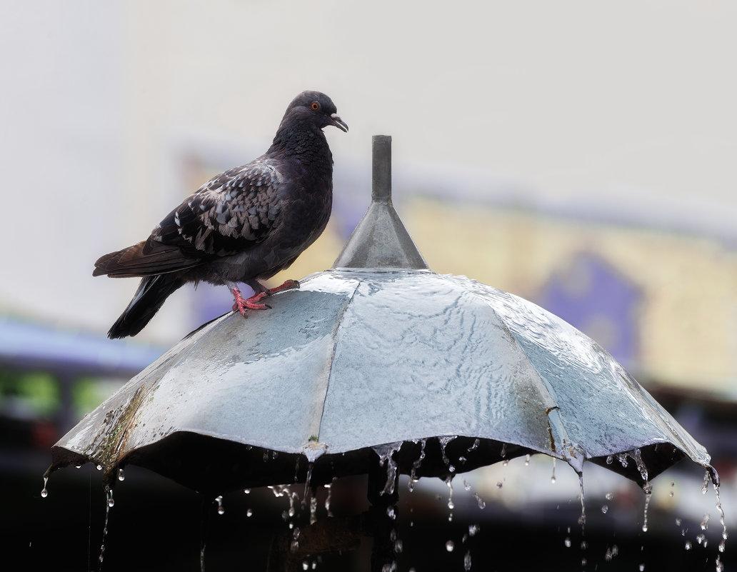 Фонтан - удобная поилка для птиц - Shapiro Svetlana