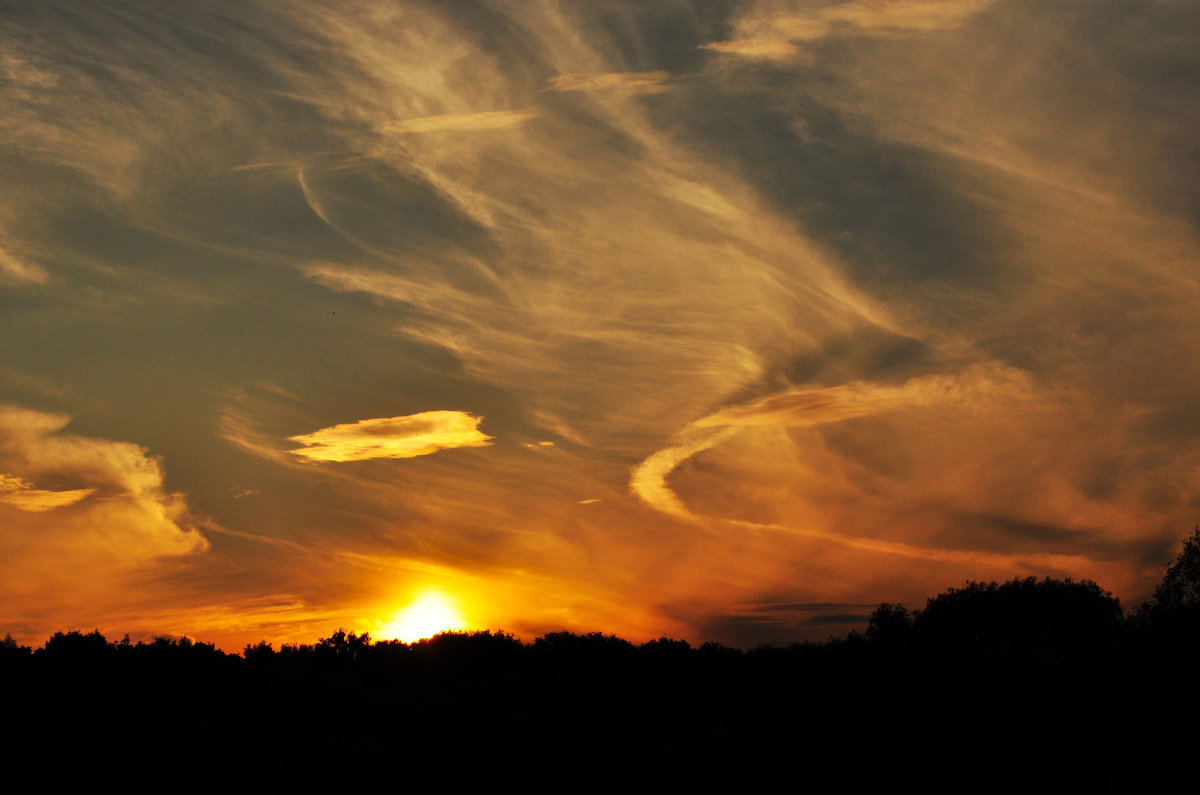 Закат над лесом - Александр Аполонов