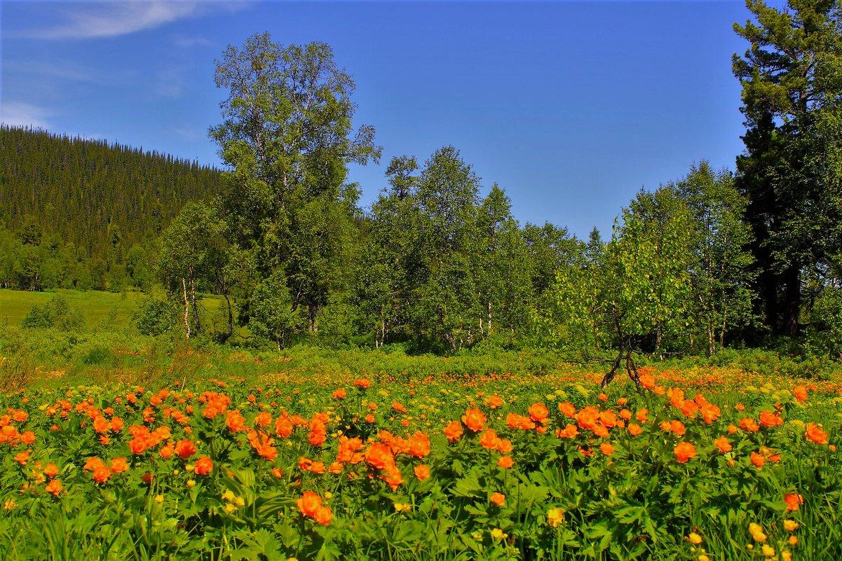 Огоньки цветут - Сергей Чиняев