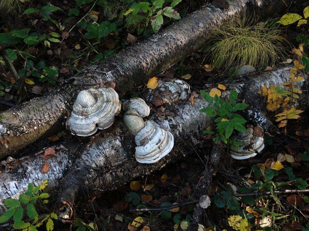 Всюду грибы - Валерий Чепкасов