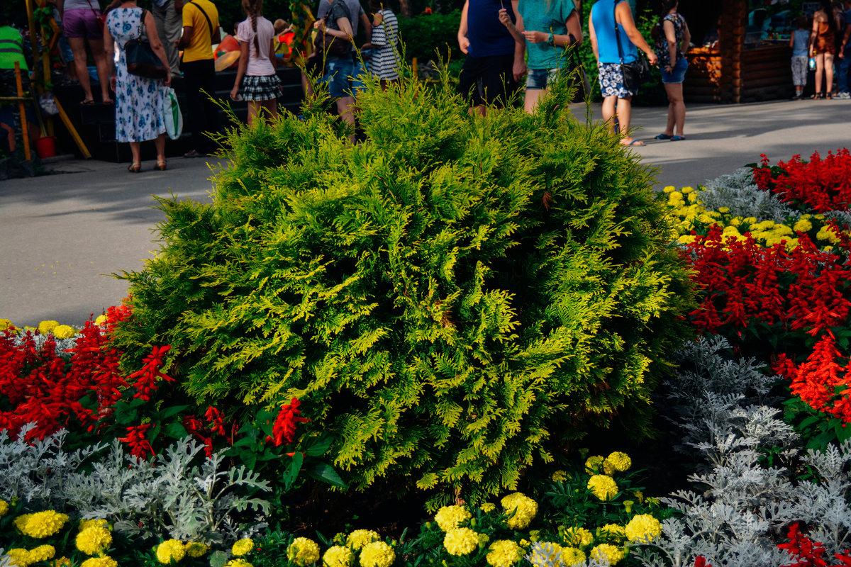 Цветные кусты - Света Кондрашова