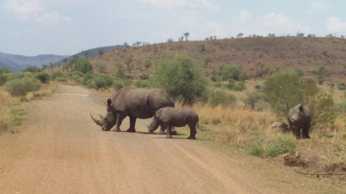 Носороги - Julia A