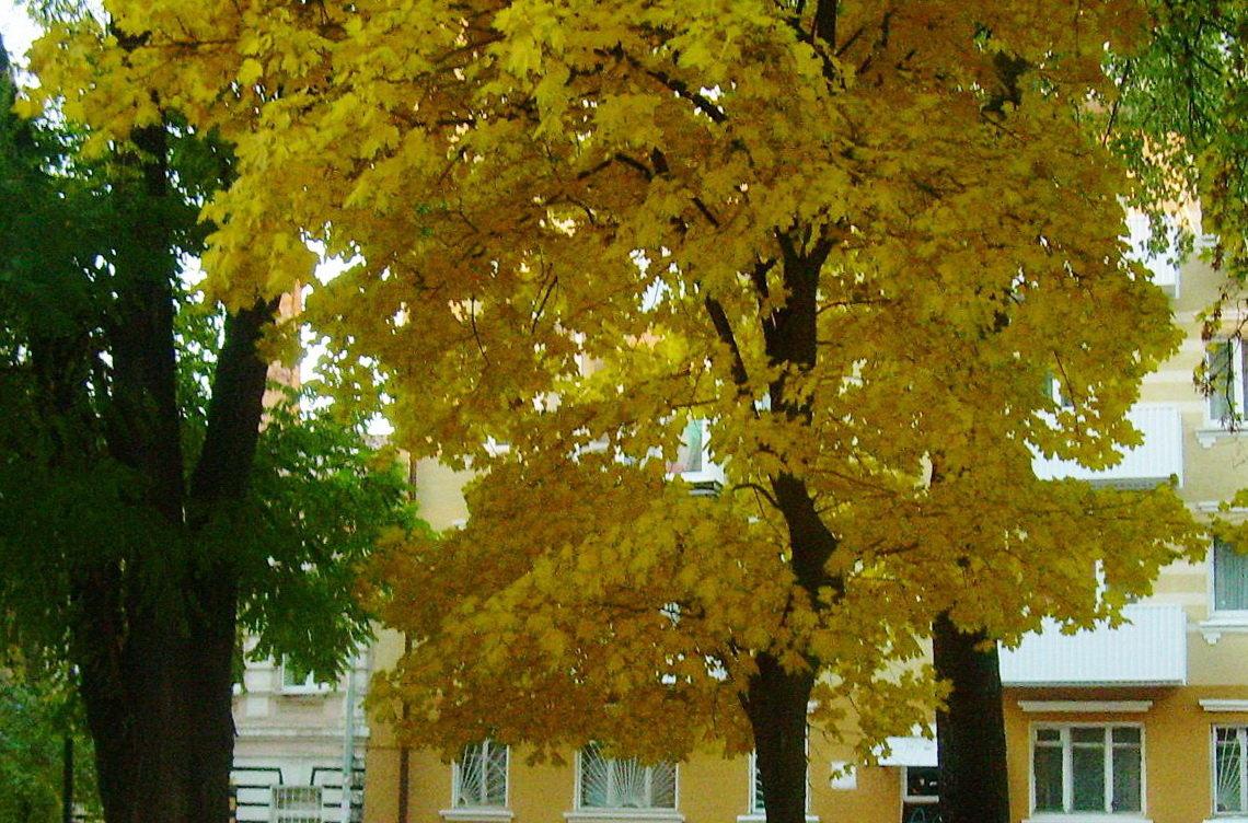 Осень в городе - татьяна