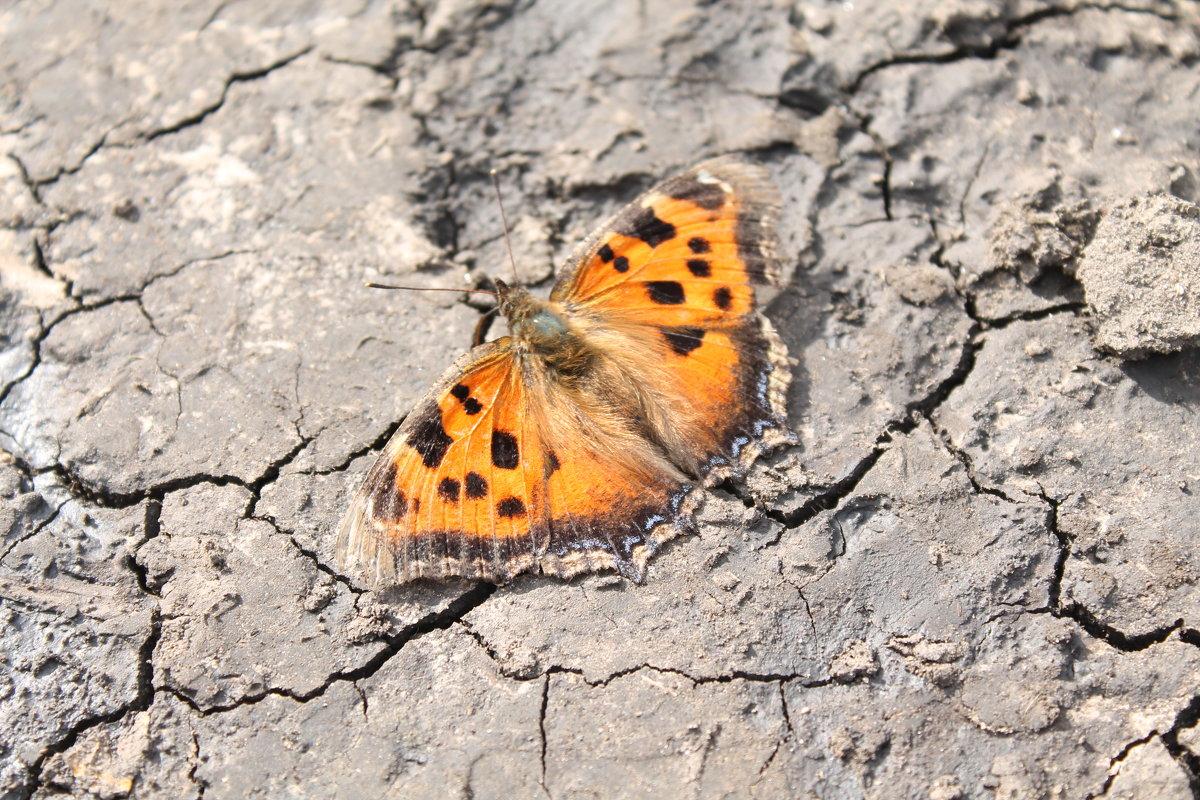 бабочка - Ксения Куценко
